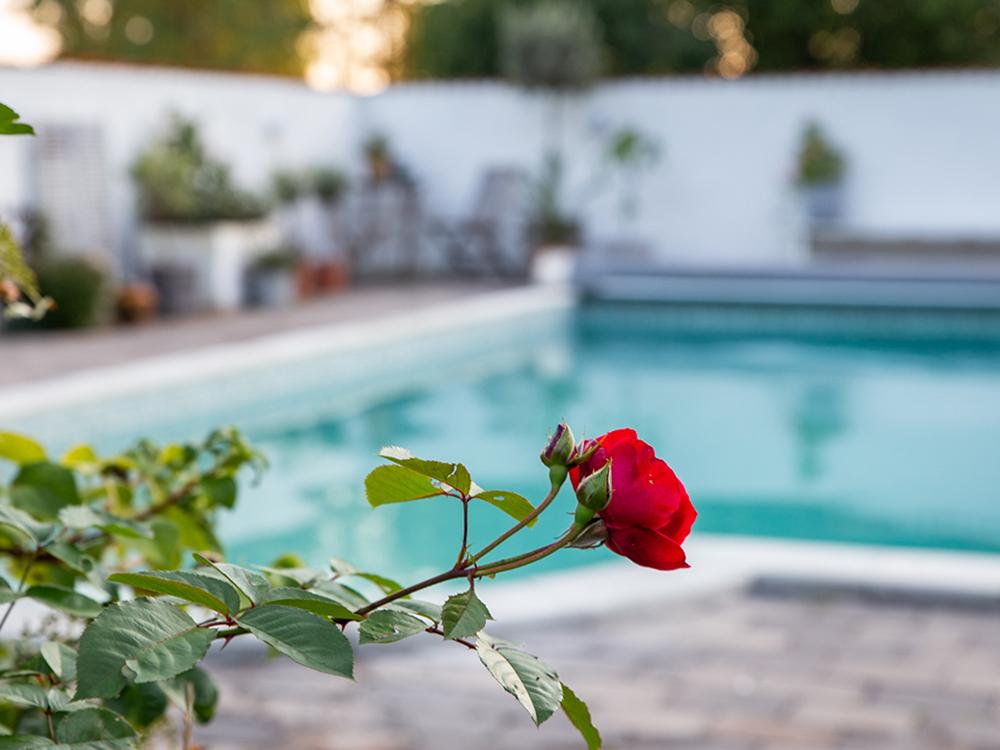 poolmiljö trädgård med pool